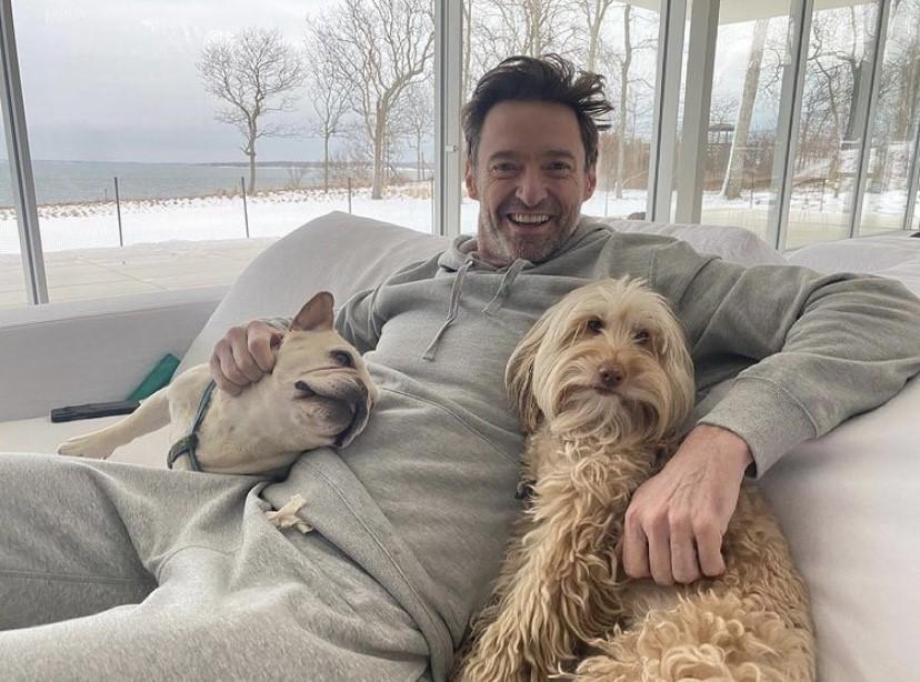 hugh jackman and dogs